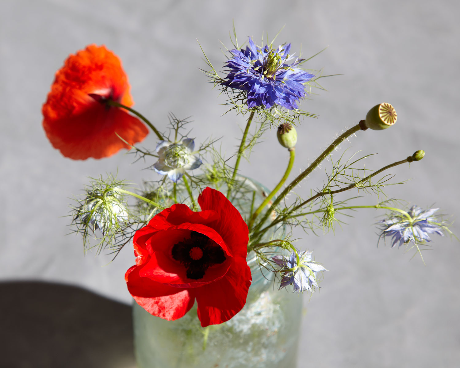 poppies-and-nigella-7109.jpg